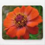 Orange Zinnia Wildflower Photo Mouse Pad