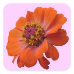 Orange Zinnia Wildflower Photo Square Sticker