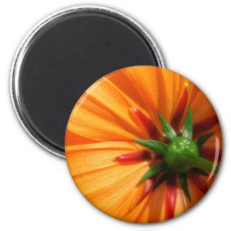 OrangeBeauty.jpg Magnet