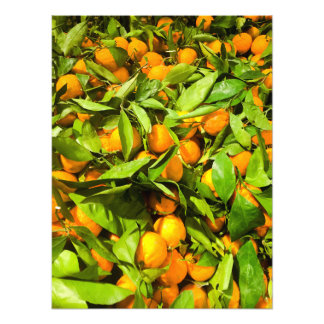 Oranges and Leaves Photographic Print