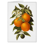 Oranges and Poppies Greeting Cards