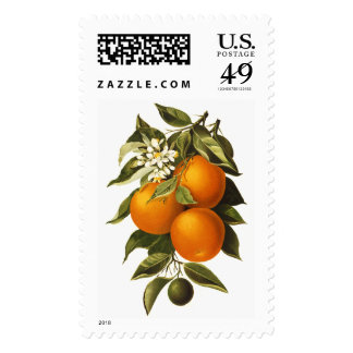 Oranges and Poppies Postage Stamps