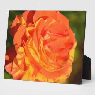 Oranges 'n' Lemons Rose plaque