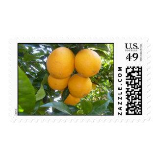 Oranges Stamps