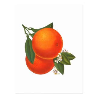 Oranges Vintage Crate Art Postcard