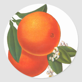 Oranges Vintage Crate Art Template Classic Round Sticker