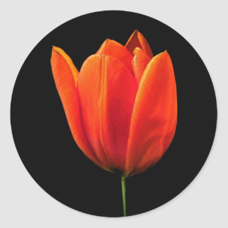 OrangeTulip Classic Round Sticker