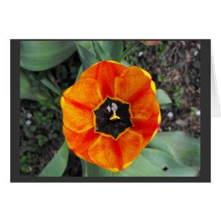 orangish flower card