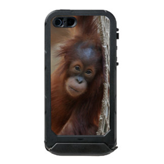 OrangUtan20150904 Carcasa De Iphone 5 Incipio Atlas Id