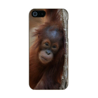 OrangUtan20150904 Carcasa De Iphone 5 Incipio Feather Shine