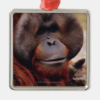 Orangután Adorno Navideño Cuadrado De Metal