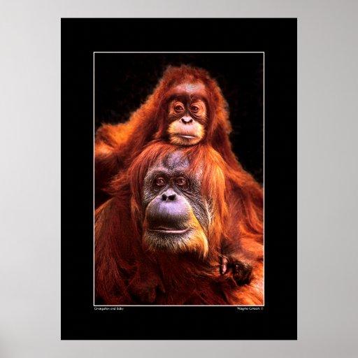 Orangutan and Baby Print