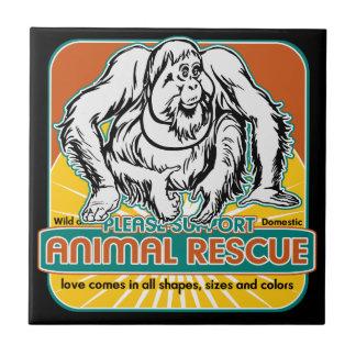Orangután animal del rescate azulejo