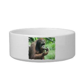 Orangutan Ape Pet Bowl Cat Food Bowl