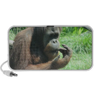 Orangutan Ape Speakers
