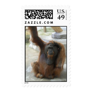 Orangutan at Denver Zoo Stamp