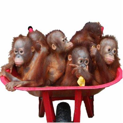barrel of monkeys images