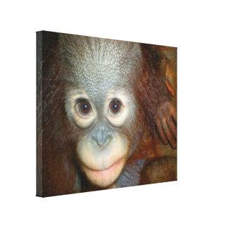 Orangutan Baby Canvas Print