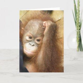 Orangutan Baby Card card