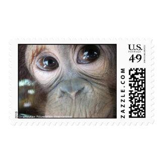 Orangutan Baby Girl Uttuh Postage