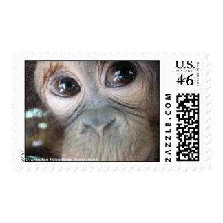Orangutan Baby Girl Uttuh Stamp