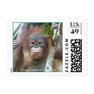 Orangutan Baby in Borneo Stamp