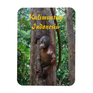 Orangutan Baby in Rainforest Magnet