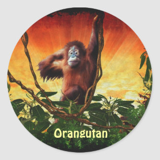 Orangutan Baby & Jungle Sunrise Great Ape Primate Classic Round Sticker