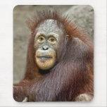 Orangutan Baby Mousepad