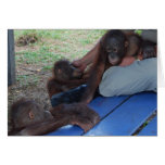 Orangutan Baby Orphans Greeting Cards