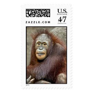 Orangutan Baby Postage