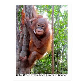 Orangutan Baby Uttuh in Rainforest Postcard