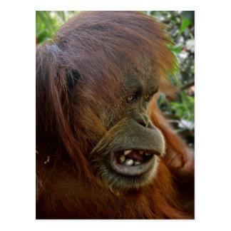 "Orangutan ""Bad Hair Day"" Postcard"