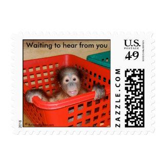 Orangután: Bebé animal Alfred Franqueo