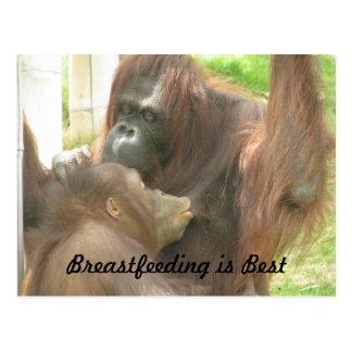 Orangutan Breastfeeding Postcard
