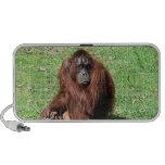 Orangután cabelludo rojo marrón en altavoz del Doo