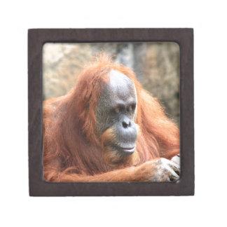 Orangután Cajas De Joyas De Calidad