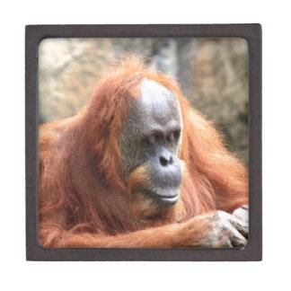 Orangután Cajas De Regalo De Calidad