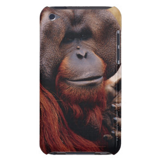 Orangután Carcasa Para iPod