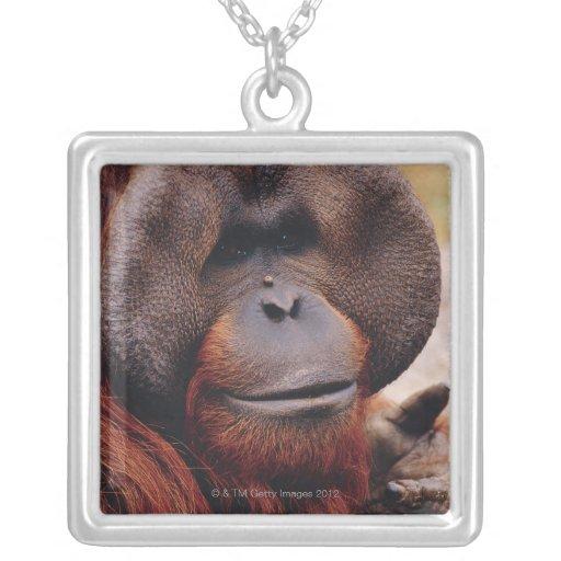 Orangután Colgante Cuadrado
