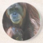 Orangután con el práctico de costa del bebé posavasos para bebidas