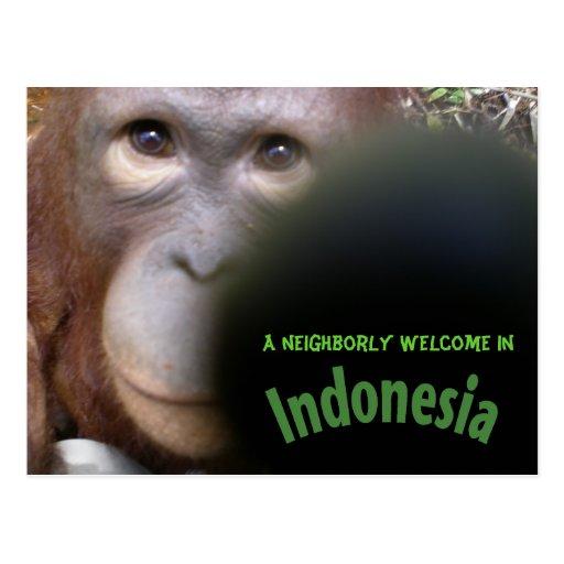 Orangután curioso con la cámara tarjeta postal