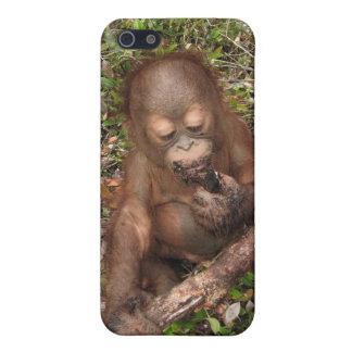 Orangután de George Baru iPhone 5 Carcasas