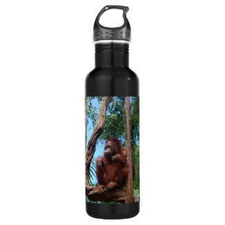 Orangután de la fotografía de la fauna en Borneo
