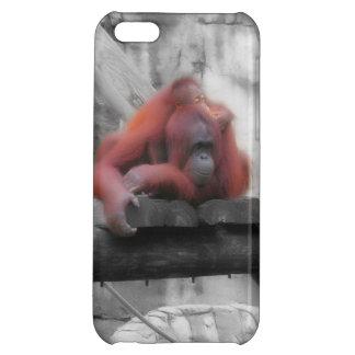 Orangután de la madre y del bebé