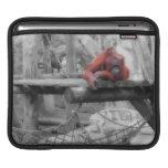 Orangután de la madre y del bebé funda para iPads