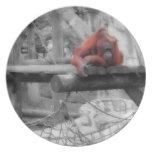 Orangután de la madre y del bebé platos para fiestas