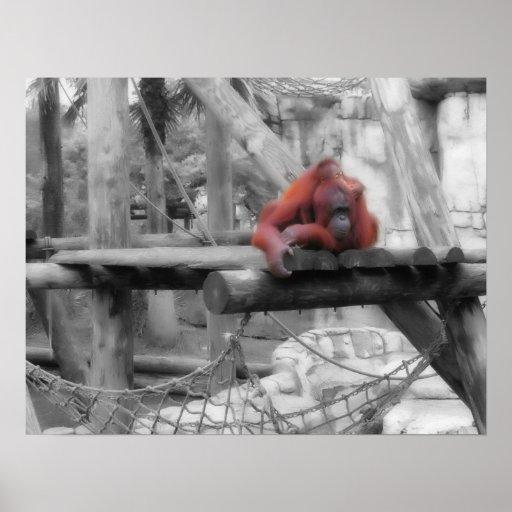 Orangután de la madre y del bebé posters