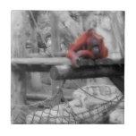 Orangután de la madre y del bebé tejas  ceramicas