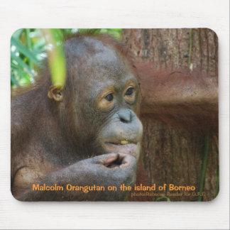 Orangután de Malcolm en la selva tropical de Borne Tapete De Raton